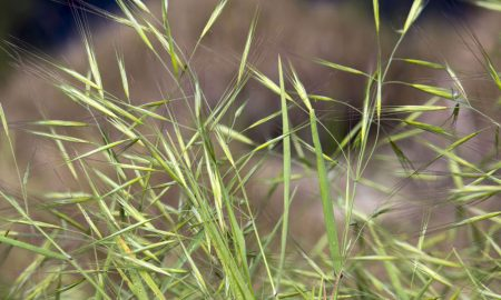 weed-grass