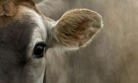 cow-dairy-(2)