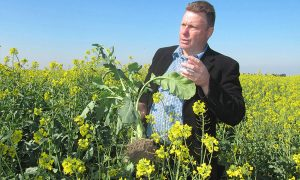 Pacific Seeds Hyola cashback