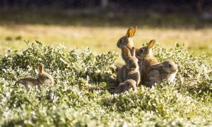 photo916-rabbit