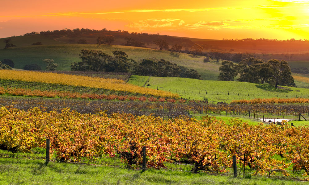 barossa-valley