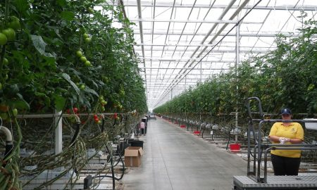 farmbiosecurity-greenhouse