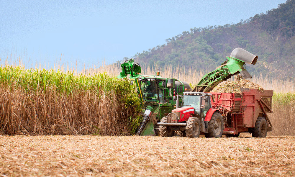 Sugar Cane Harvester : Growers and harvester operators invited to take part in