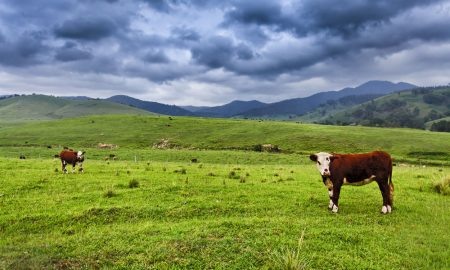 cattle-farm-land