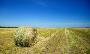 haybale-in-field