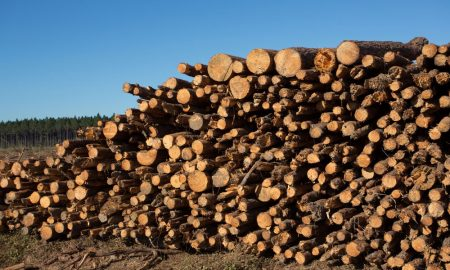 forestry logs stock image