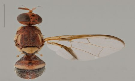 New tools identify fruit flies