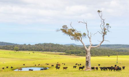 cattle farm WA stock image