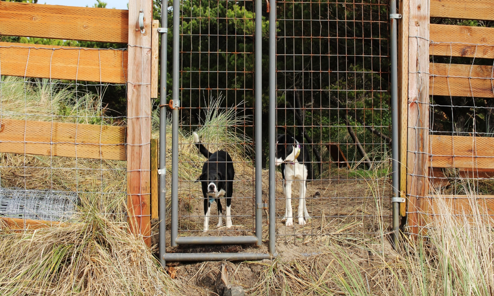 dog fencing stock image