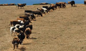 livestock feed leading agriculture