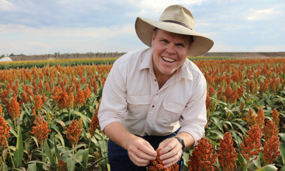 Darren Aisthorpe - sorghum. Image courtesy of GRDC