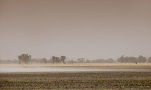 The latest data about climate changes in the Goondiwindi region and how grain growers can adapt will be part of the keynote address at the GRDC Grains Research Update in March. Photo GRDC.