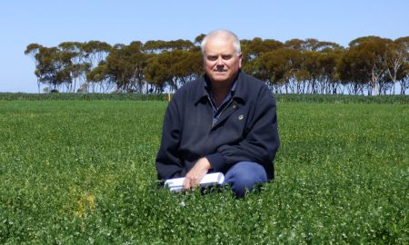 Mark Seymour in lentil crop 2 P1260356