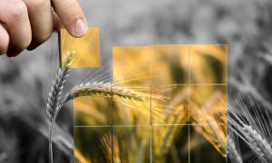 grain blocks stock image
