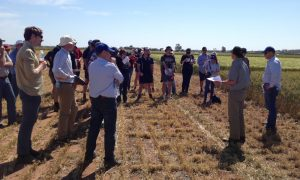 Growers and industry representatives being updated on a trial at Cunderdin investigating the impacts of rotation diversity and residue handling on wheat yield and protein content. Photo by CSIRO.