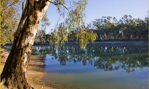 murray river victoria stock image