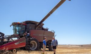 Pacific Seeds' Steve Lamb and Badgingarra farmer Tim Hayes taking a break during wheat harvest.