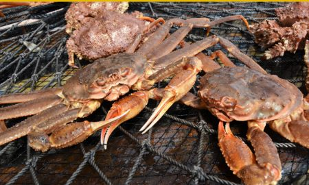 crab fishing stock image