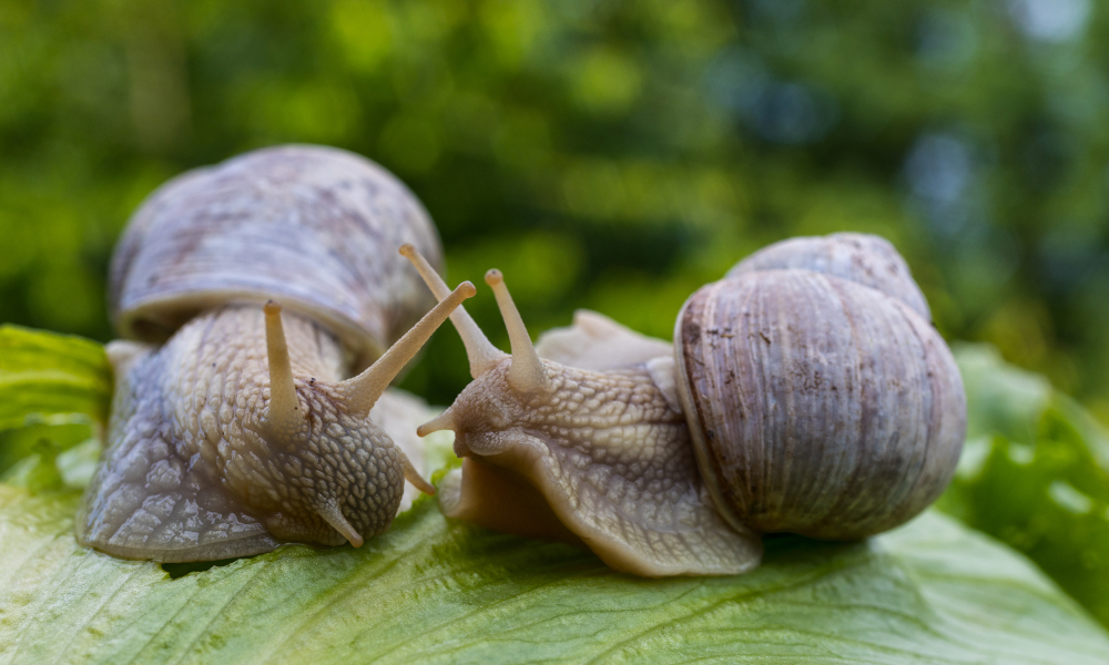 snails pests agriculture stock image