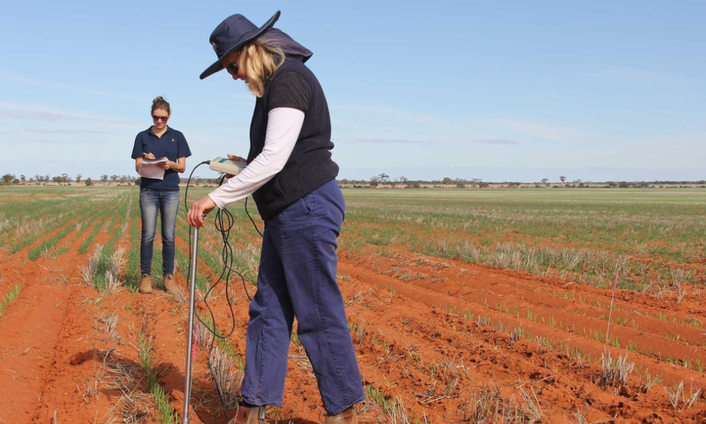 Research officer Dana Mulvany (left) & senior development officer Caroline Peek measure soil moisture at a Bonnie Rock as part of a new $4.8 million soils project - DPIRD.