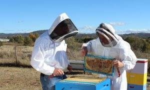 Frank and Alan opening a hive