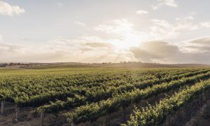 Barossa Valley landscape