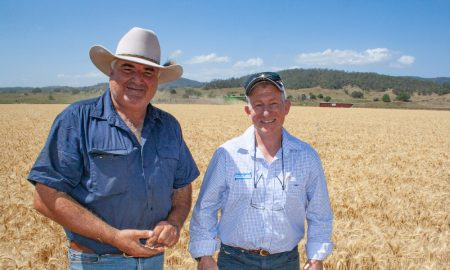 Mark Carter with Pacific Seeds territory manager John Eggins in Mustang wheat.