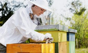 apiary woman stock image