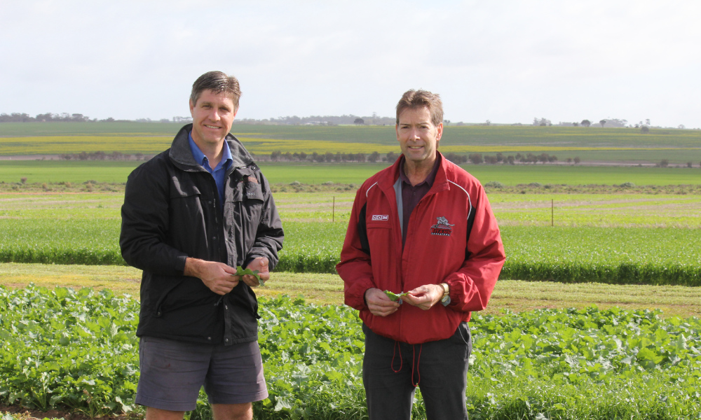 Professor Hugh Beckie pictured (right) in a resistant weed trial in WA's central Wheatbelt with AHRI's Dr Michael Ashworth. Credit: Jo Fulwood.