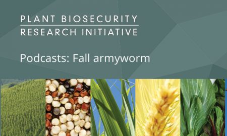 Podcasts for fall armyworm management