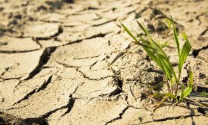 Tasmanian Drought Resilience Adoption and Innovation Hub