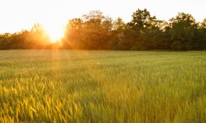 biotechnology for food security